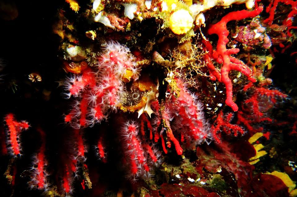 L'isola di corallo, l'economia del corallo nell'Isola di Ustica di Gabriella Monteleone