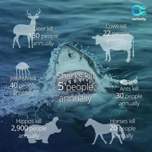 for sharks