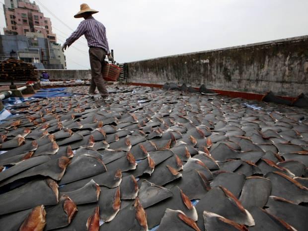 Una ragione di più contro lo shark finning: il consumo delle carni di squalo può causare un pericolo per la salute umana