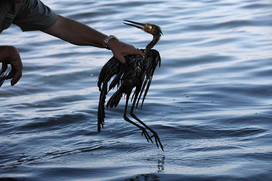 SHELL cuts losses, abandons Arctic drilling by WWF