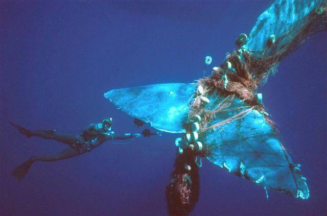 Questa immagine ha l'attributo alt vuoto; il nome del file è whale-trapped.jpg