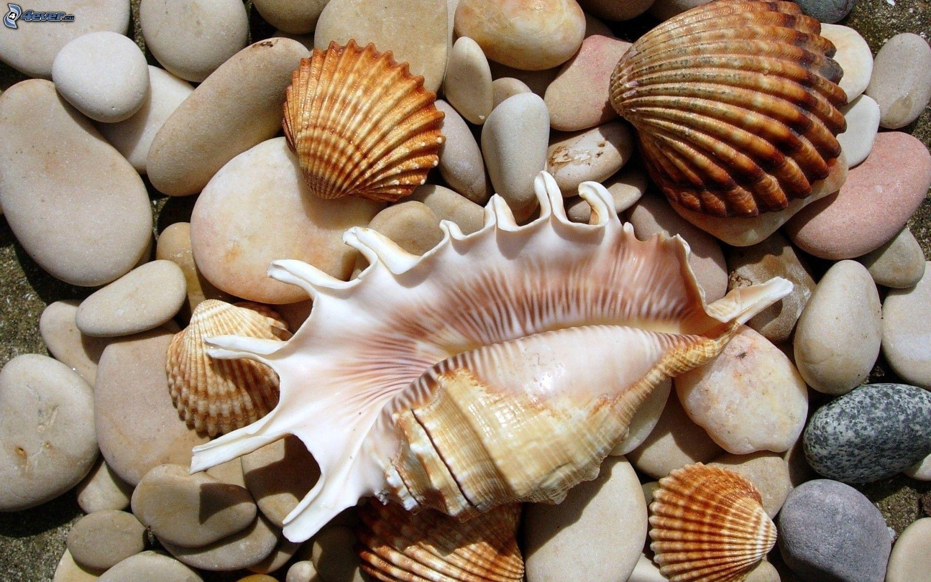 Elementi di malacologia di Pamela Baiocchi – parte I – da Nautilus