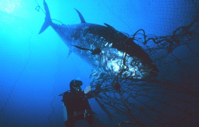 fish2003