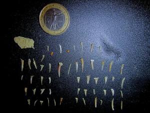 colagrossi 2 denti squalo