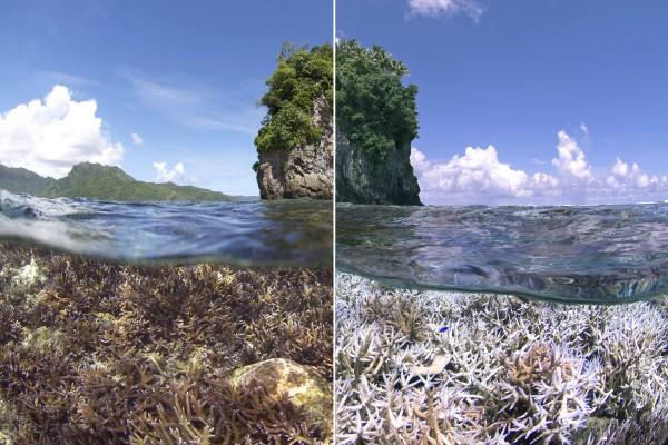 XL-Catlin-Seaview-Survey-American-Samoa-5