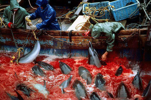 Taiji, trying to make clear this useless and cruel practice