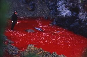 massacre-de-dauphins-dans-la-baie-de-taiji
