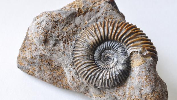 Ammoniti, simbolo della paleontologia - parte prima di Aaronne Colagrossi