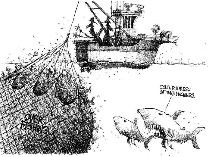 pesca-sovrapesca