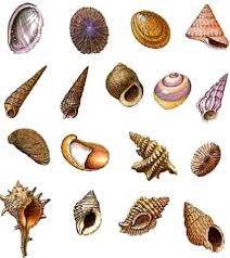 gasteropodi