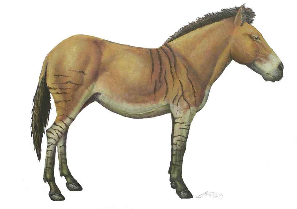 Equus_stenonis_2