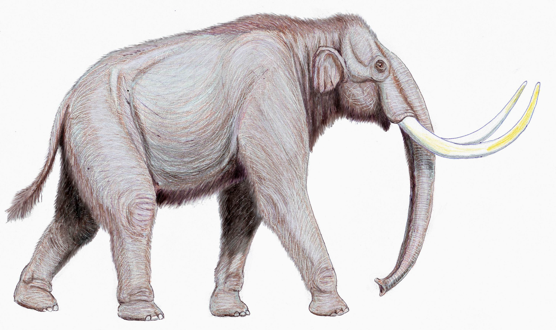 Mammuthus_trogontherii122DB