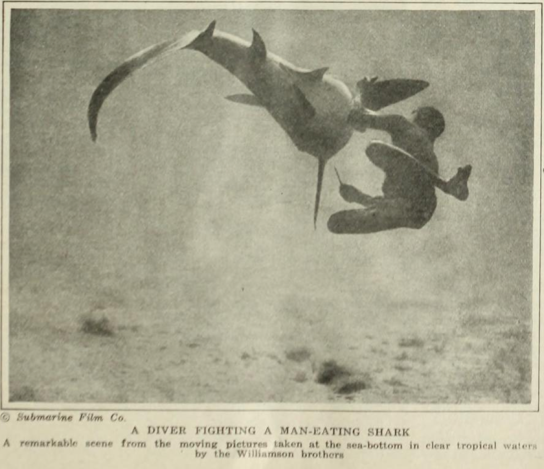 4 - Williamson lotta con lo squalo