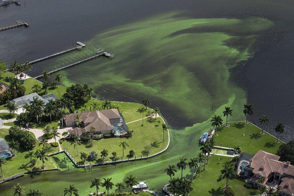 algae-emergency-florida (1)