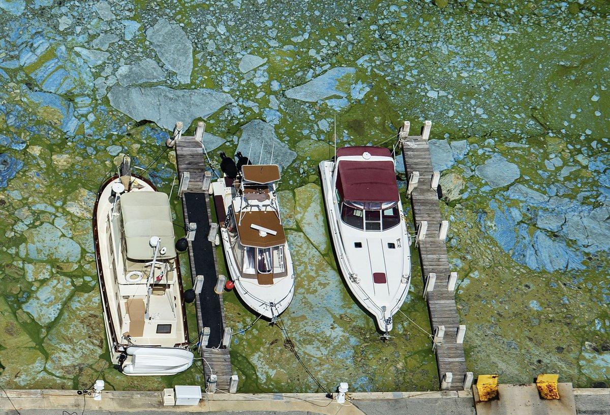 algae-emergency-florida