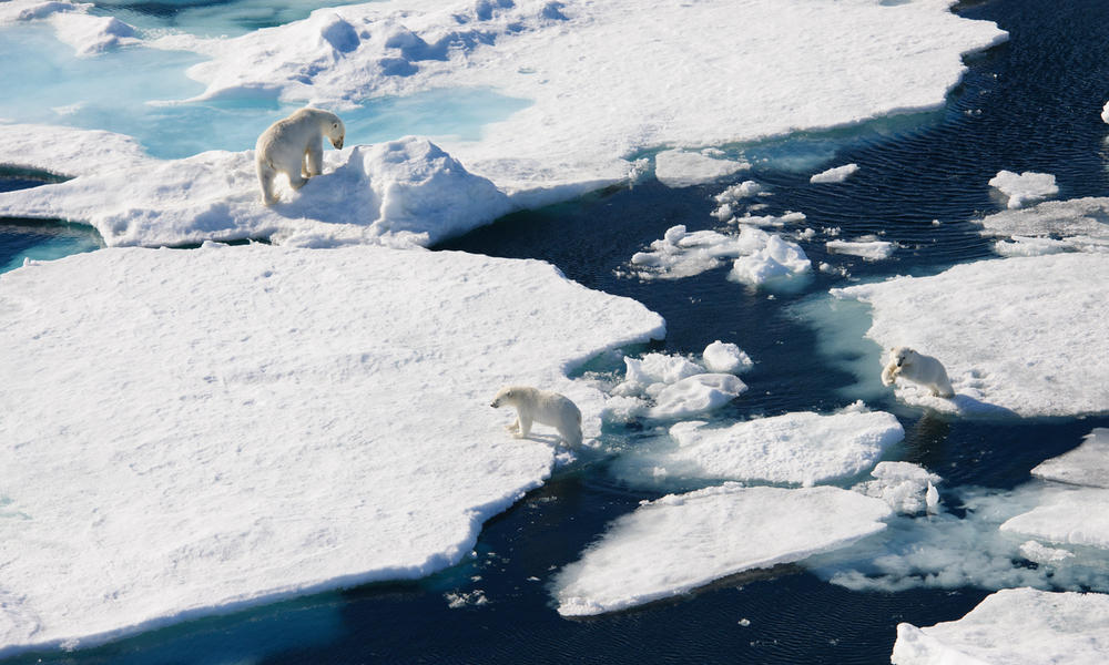 5 ways to help the Arctic as the planet warms by WWF