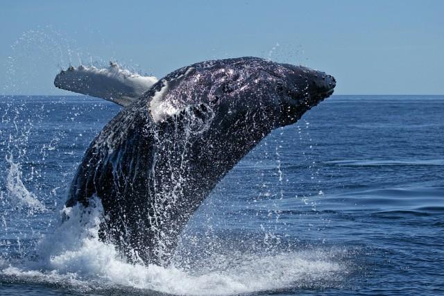 Questa immagine ha l'attributo alt vuoto; il nome del file è balena-640x427.jpg