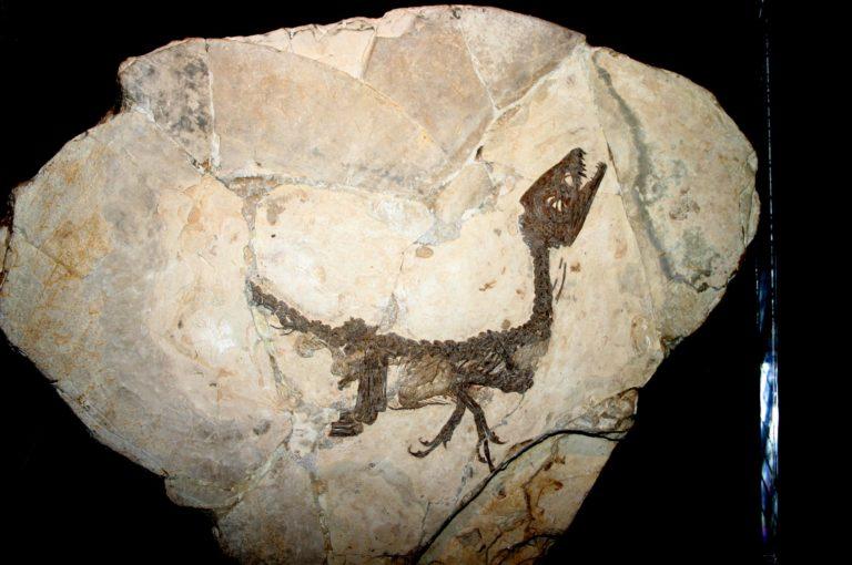 Scipionyx-samniticus-768x510