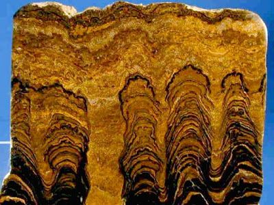 stromatoliti-fossili