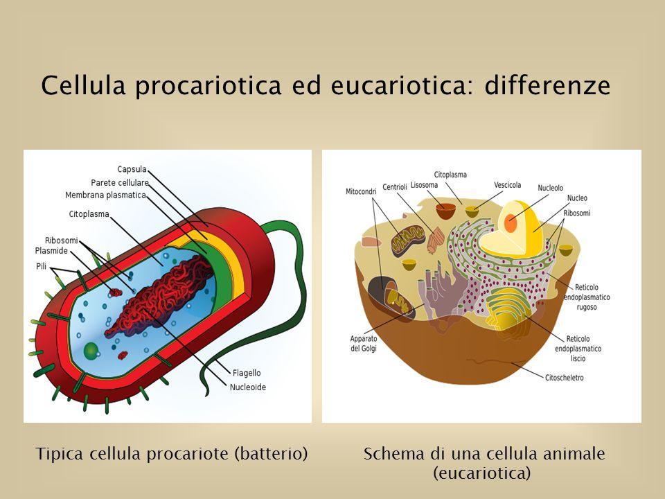 batteri-eucarioti-e-procarioti