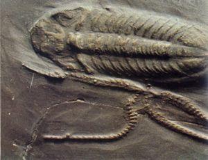 Il Paleozoico, tutto iniziò e quasi finì nel Cambriano
