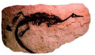 157 Mesosaurus brasilensis