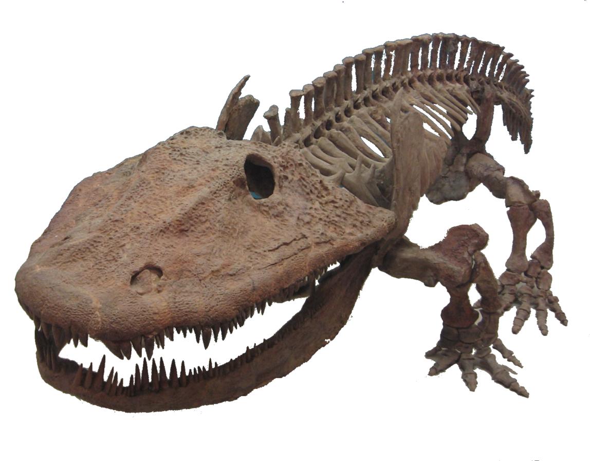 Eryops_skeleton labiritodonti