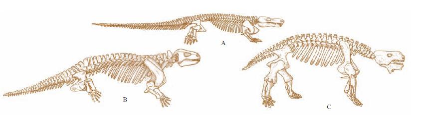 cotilosauri