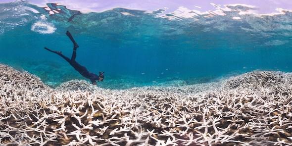 Coral Planting di Patrizia Stipcich