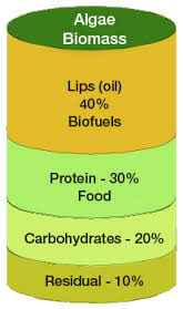 algae bio