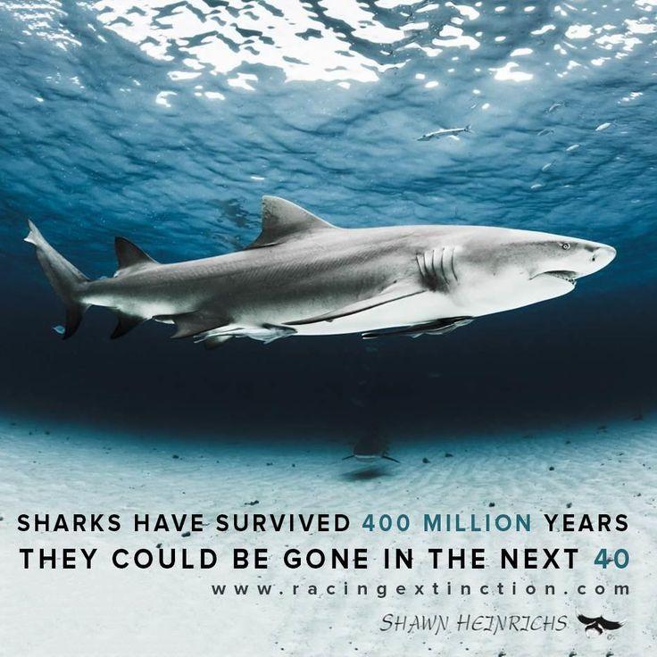 92fb2a8d4bb82622797518f030ac4187--racing-extinction-ocean-art