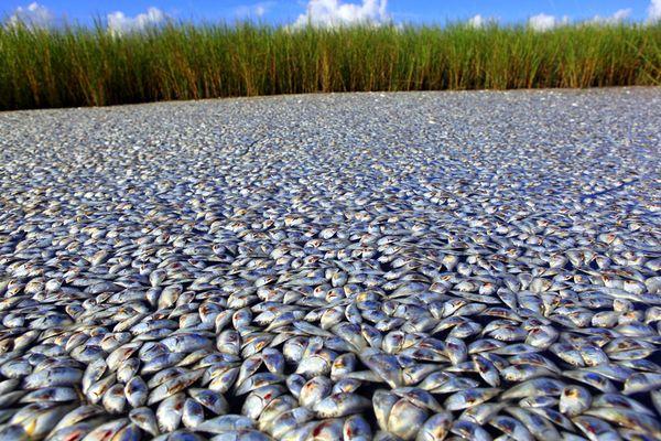 fish-kill-louisiana-bayou-overall_26120_600x450