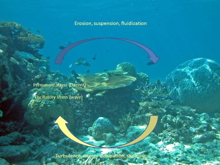 sediment processses