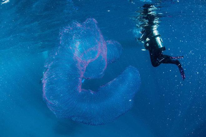 Uno strano incontro: le uova del calamaro rombo