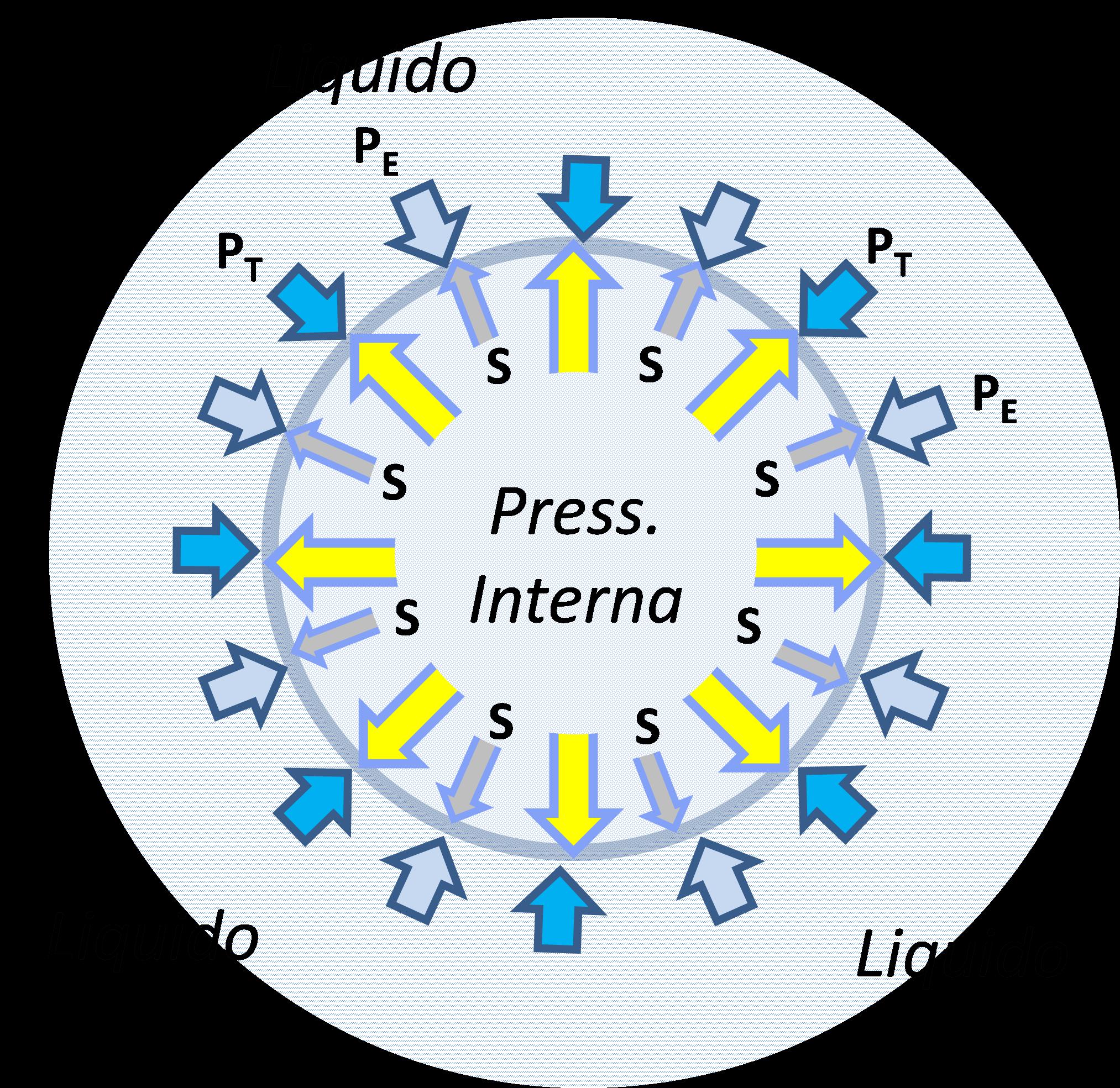 Equilibrio di pressioni su una bolla in presenza di surfattanti