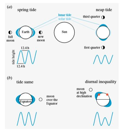 Marine biorhythms, bridging chronobiology and ecology part I by Martin Bulla et alii