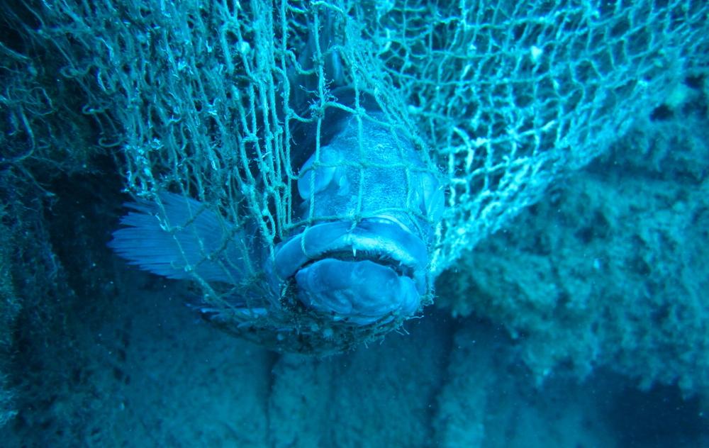 Reti fantasma: un problema che unisce pescatori e subacquei di Argentario Divers
