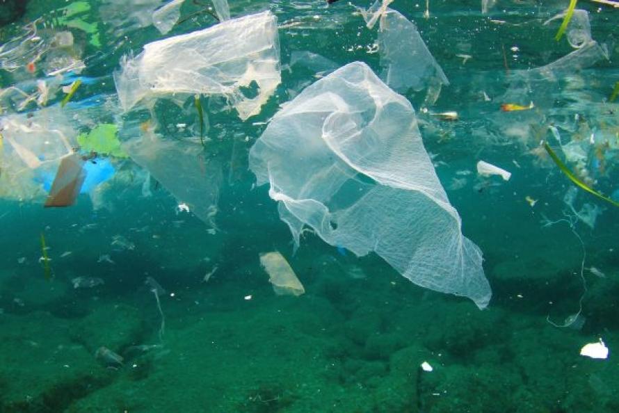 Emergenze ambientali: Plastic microfibre ingestion by deep-sea organisms by M. L. Taylor , C. Gwinnett , L. F. Robinson  & L. C. Woodall