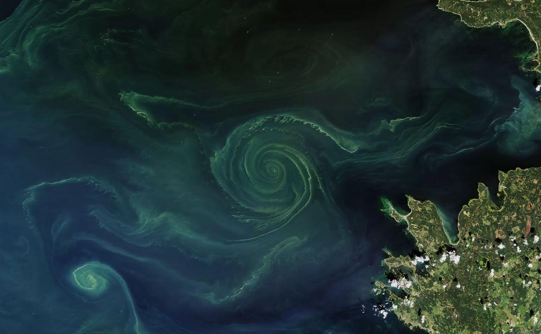 Fioritura delle alghe, tra bellezza e pericolo