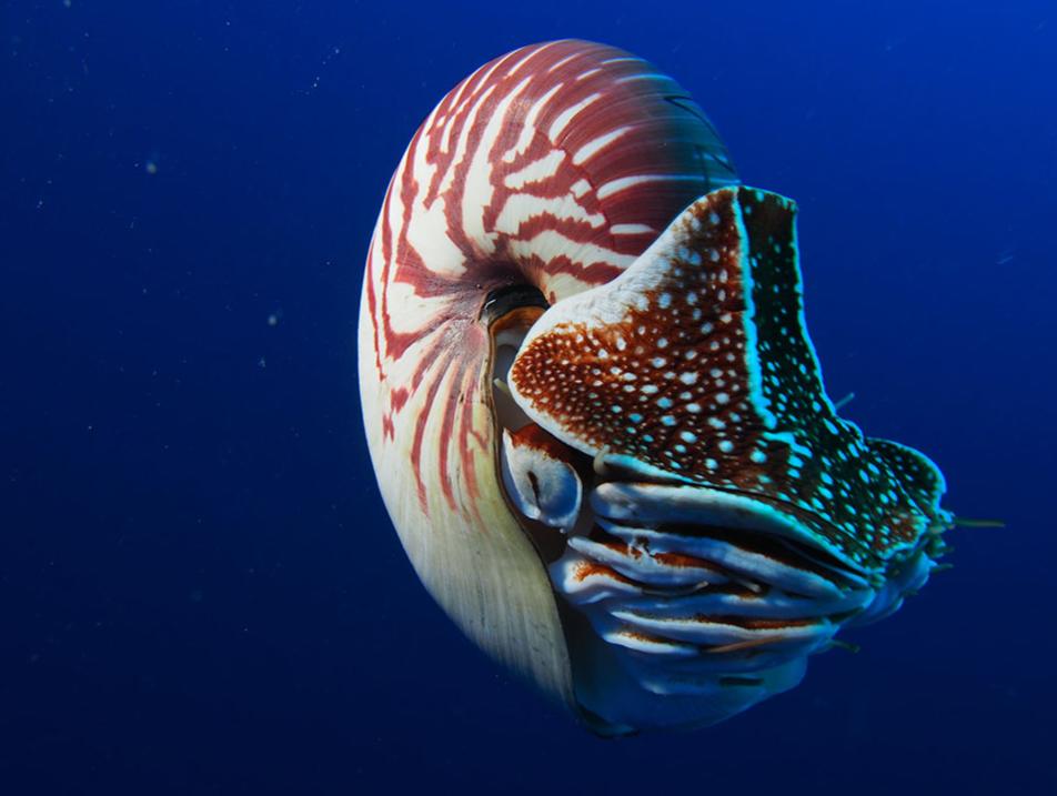 Nautilus, dai flutti del tempo di Pamela Baiocchi e Andrea Petri