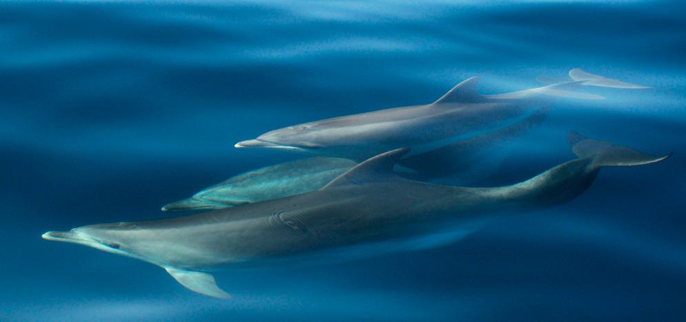 Stage di ricerca sui mammiferi marini 2019 - BDRI Galizia (Spagna)