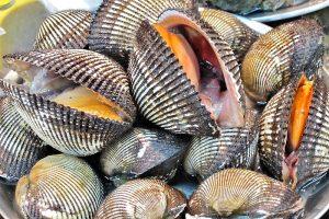 Biologia marina: I molluschi: questi straordinari sconosciuti
