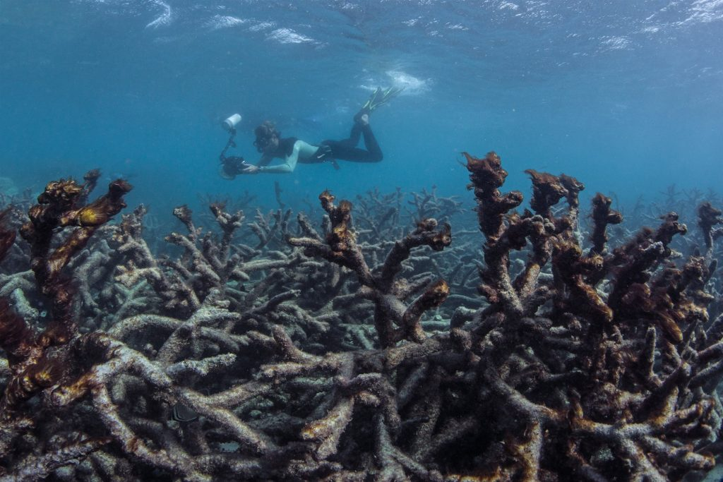 Questa immagine ha l'attributo alt vuoto; il nome del file è 180420-coral-great-barrier-reef-mn-1340_fa9155024dde8055738325d556a34cf3.fit-2000w-1024x683.jpg