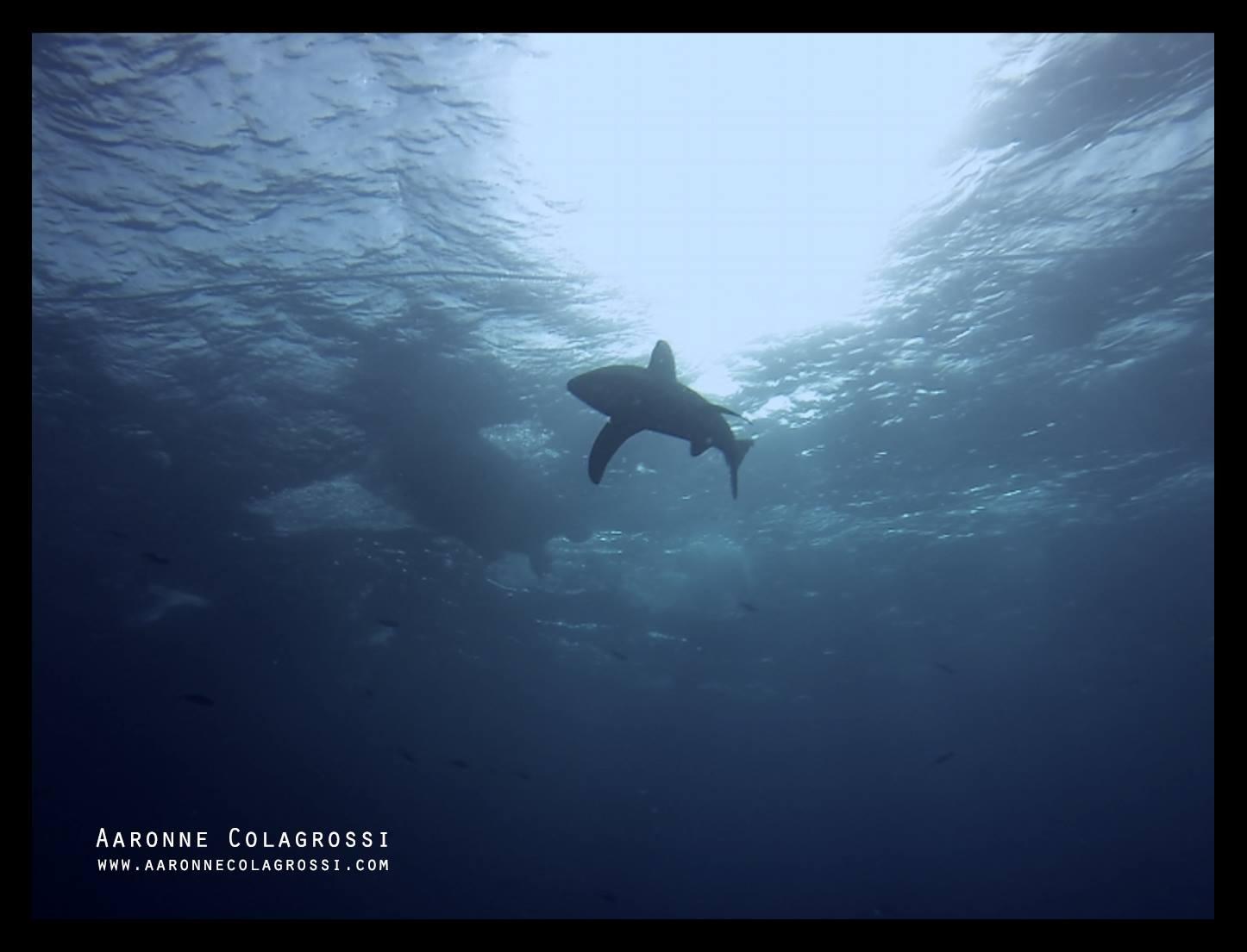Avventure nel Mar Rosso di Aaronne Colgragrossi – intervistiamo l'autore