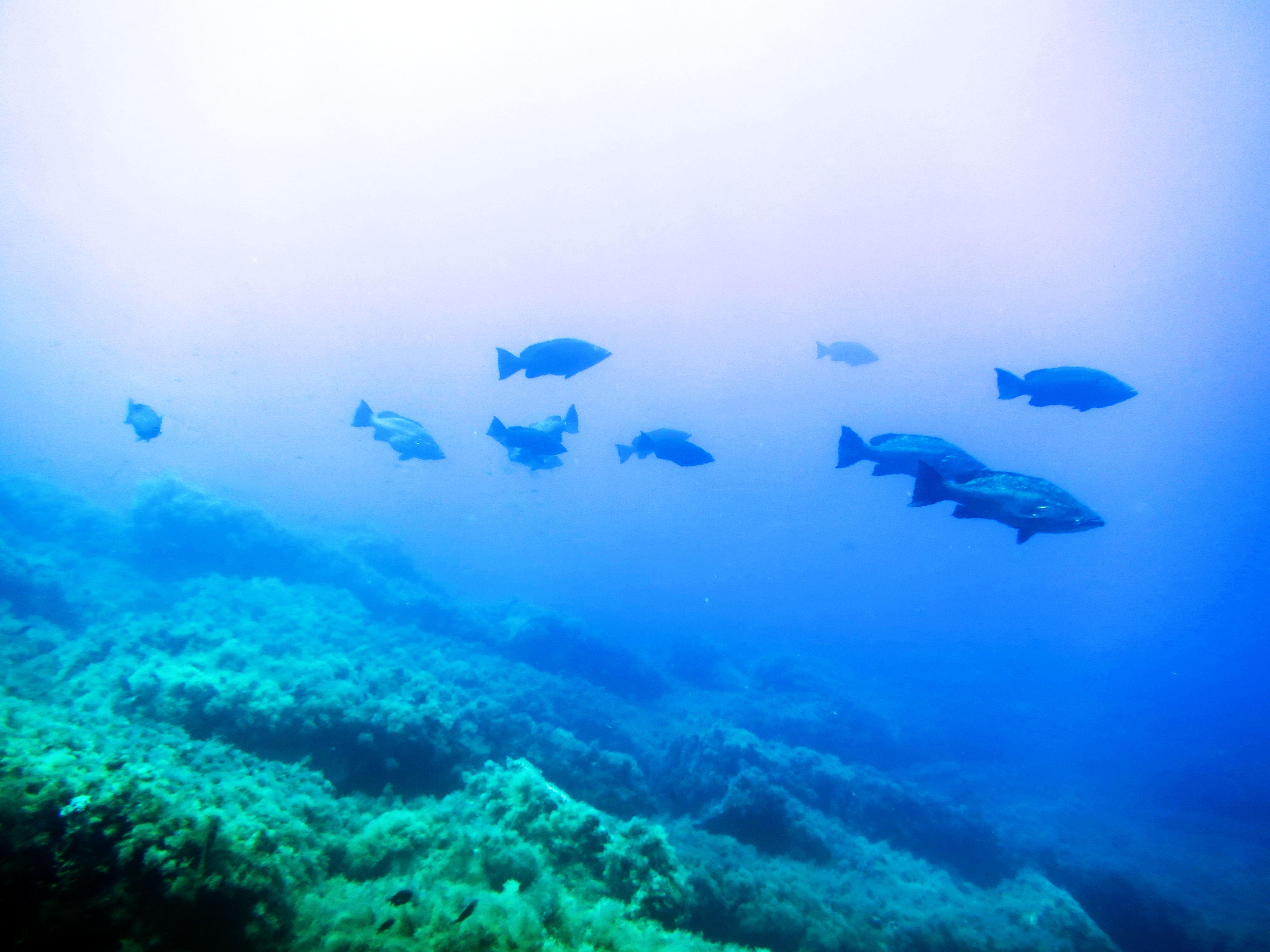 """Reportage: Area marina protetta di Ustica di Salvatore Livreri Console Direttore A.M.P. """"Isola di Ustica"""""""