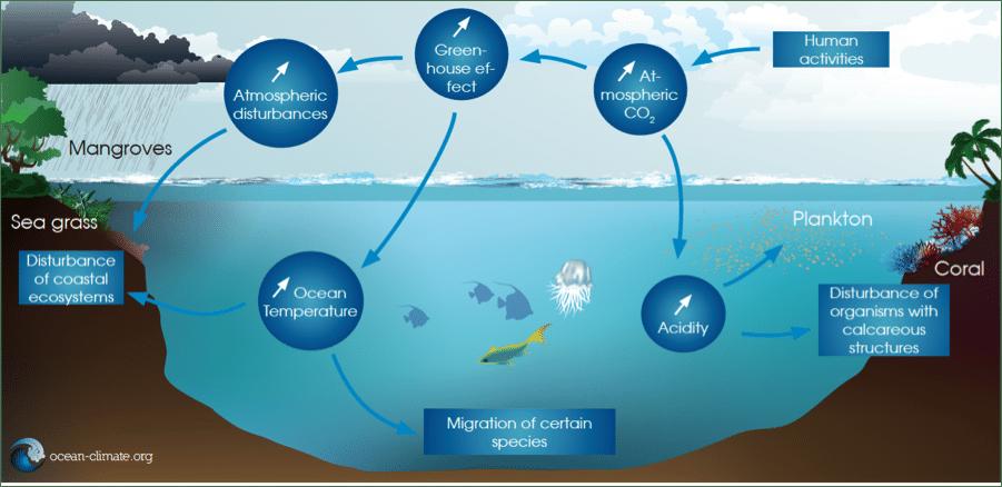 Ecologia: quanto le variazioni climatiche possono influenzare la distribuzione ed il comportamento dei predatori marini?