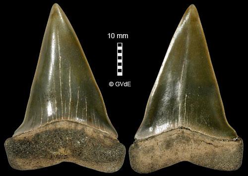 Alto Molise, terra di rocce e denti di squalo di Aaronne Colagrossi