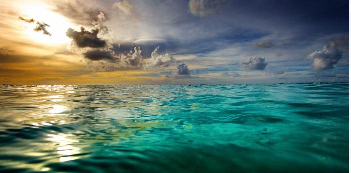 La vita nel mare: cenni di oceanografia biologica di Luigi Piazzi