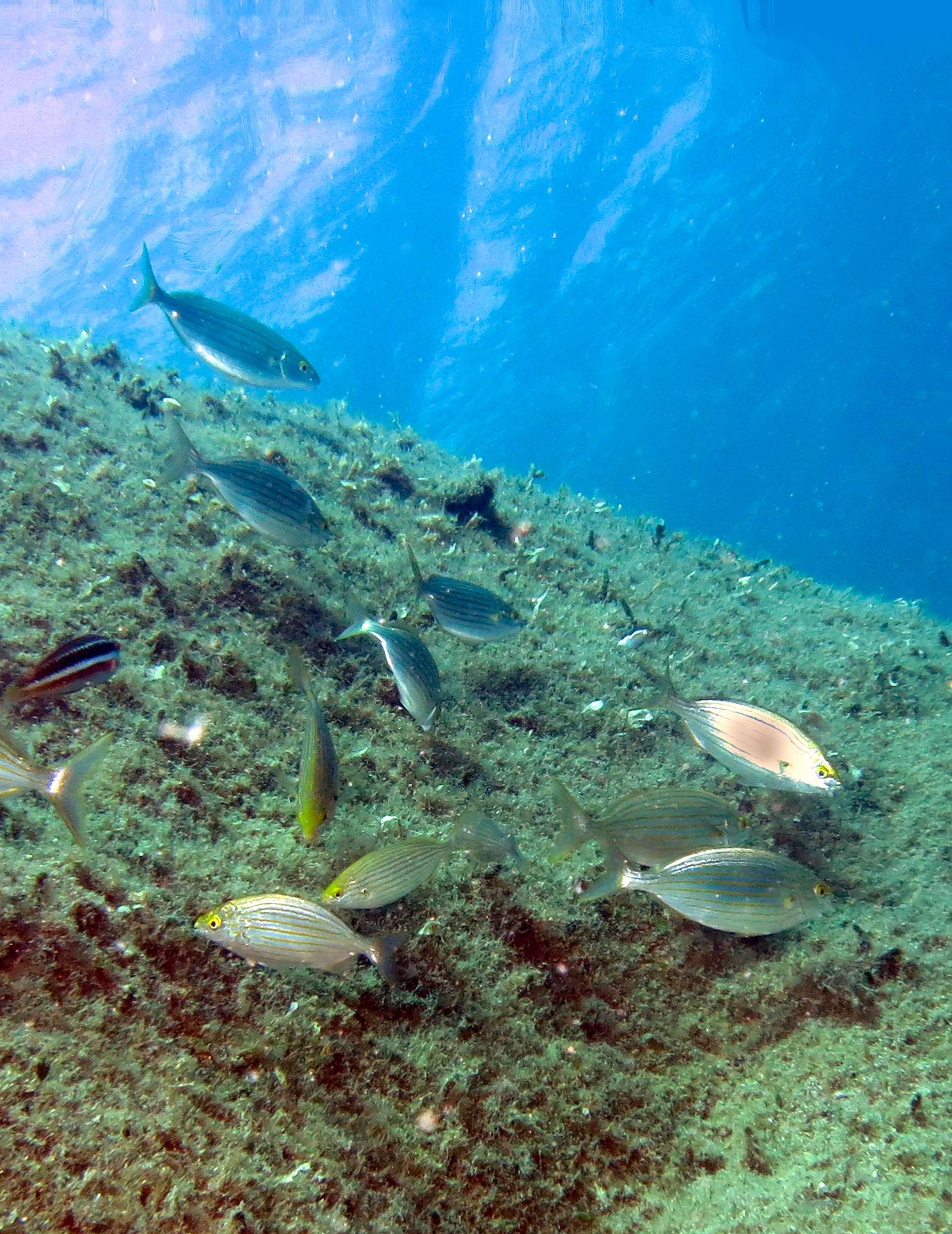 La tutela del nostro mare è fallimentare … articolo pubblicato da WWF IT