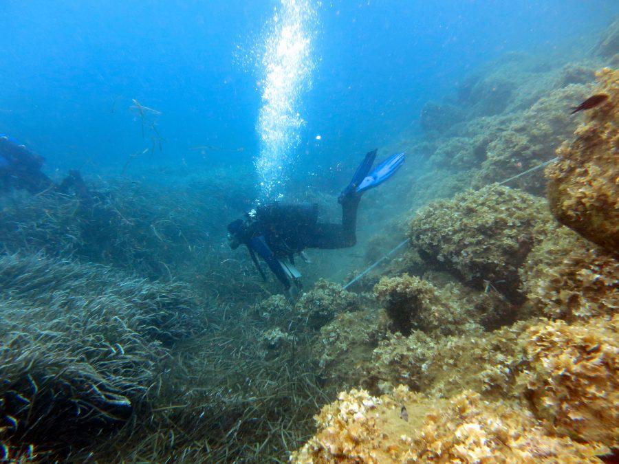 Ipercapnia: insidia dell'immersione profonda (parte 2) di Luca Cicali